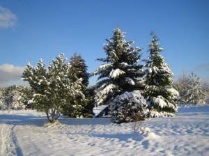 Ziema 2013. gada 8. decembrī