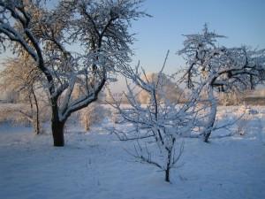 Sapņu ziema